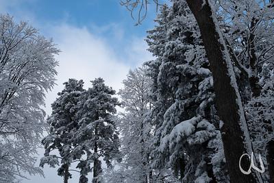 Winter im Wald, schneebdeckte Tannen, Dreifürstenstein, Albtrauf, Schwäbische Alb, Baden-Württemberg, Deutschland