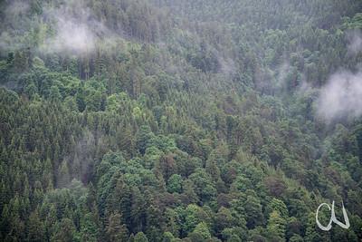 Mischwald, Fichten, Laubwald, Schwarzwald, RInken, Deutschland