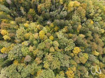 Herbstlicher Wald, Luftaufnahme, Drohnenaufnahme, Laubwald, Bläsiberg, Tübingen