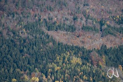 Wald am Rande der Schwäbischen Alb, Nadelwald, Mischwald und Lichtung mit nachwachsendem Wald, Blick vom Hörnle bei Tieringen, Albtrauf, Schwäbische Alb, Baden-Württemberg, Deutschland
