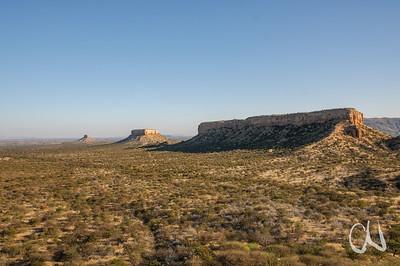 Mopane-Wald, Vingerklip, Ugab-Terassen, Damaraland, Namibia