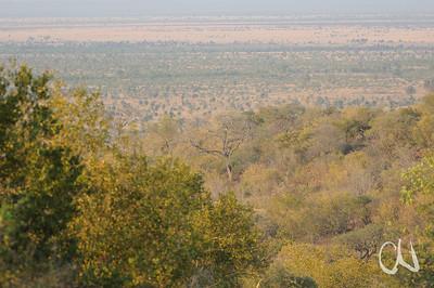 Übergang von Trockenwald, Baumsavanne und Savanne, nördlicher Krüger Nationalpark, Südafrika