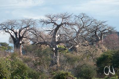 Krüger Nationalpark, Kruger National Park, Südafrika, South Africa