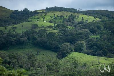 Weideland mit Trockenwaldresten im Norden Costa Ricas