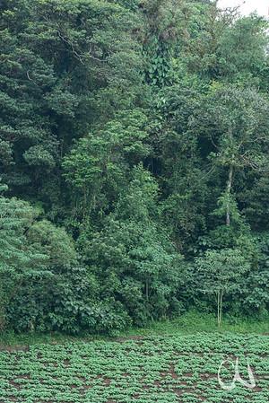 tropischer Regenwald, Bergregion, Nicaragua