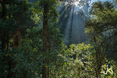 früh am Morgen im Bergregenwald (ca. 2200 m Höhe), Sonnenaufgang, San Gerardo de Dota, Cerro de la Muerte, Costa Rica