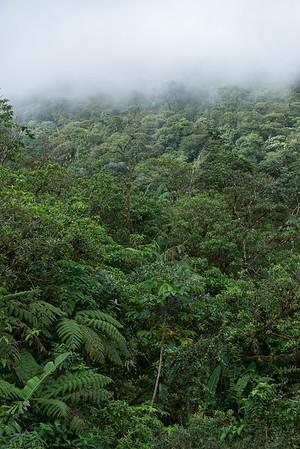 Regenwald am Vulkan Tenorio, Costa Rica