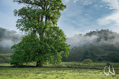 Rainforest cattle pasture