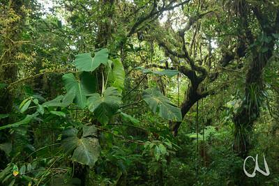 Monteverde Cloud Forest Reserve, Nebelwald in Monteverde, Costa Rica