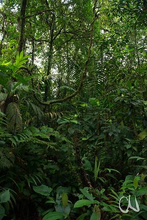 Sendero Las Palmas, Braulio Carillo Nationalpark, Costa Rica