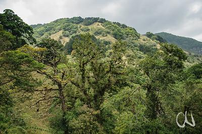 mit Epiphyten bewachsene Bäume, Cerros de Escazú, San José, Costa Rica