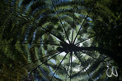 leaves of tree fern in front of sun,  Braulio Carillo Nationalpark, Costa Rica