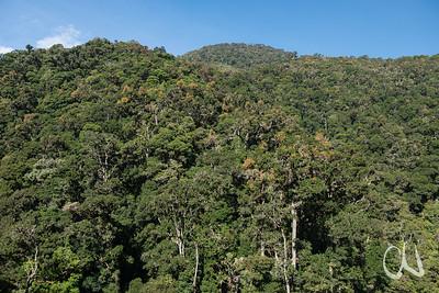 montaner Regenwald (ca. 2200 m Höhe), San Gerardo de Dota, Cerro de la Muerte, Costa Rica