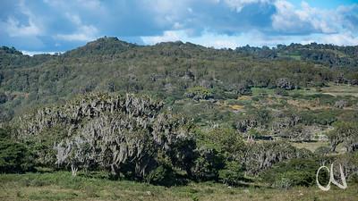 dicht mit Flechten bewachsener Saisonwald, Nicaragua
