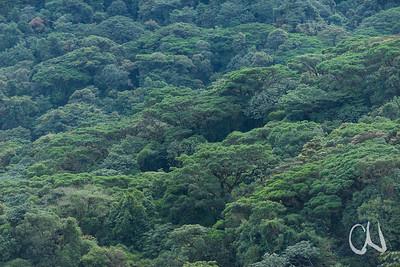 Nebelwald Reservat Santa Elena, Monteverde, Costa Rica
