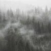 Fog Rolling Through Forests