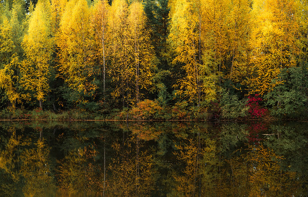 Gold Reflection