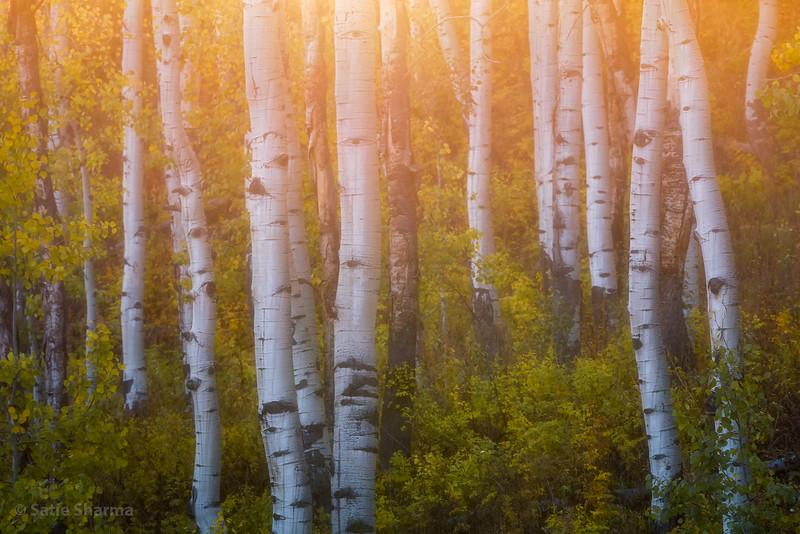 Gunnison Forest Light