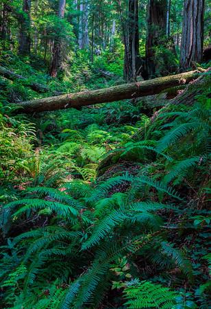 Prairie Crk Redwoods