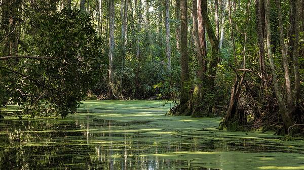 Okefenoke Swamp, Florida