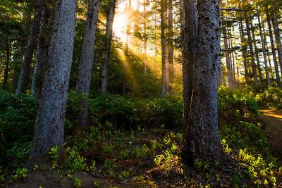 sunrays thru the trees