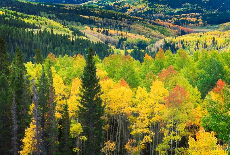 Ohio Pass Fall Colors