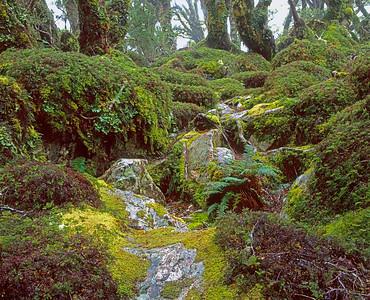 MacKenzie Lk Rain Forest, NZ