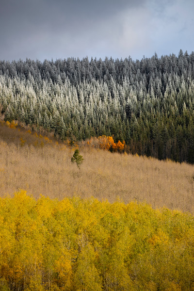The fall foliage gets an early dusting of snow in the Santa Fe national forest.
