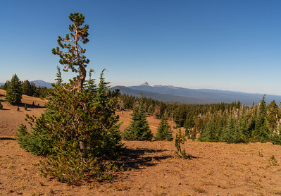 Forest Portrait: Whitebark Pine Grove overlook Mt. Thielsen | Crater Lake National Park
