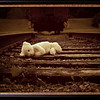 Forgotten on the Tracks