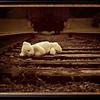 Forgotten on the Tracks