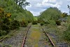 The disused Kilmustulla Shale Sidings. View of the loop looking towards the Junction. Mon 07.05.19