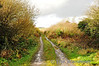 Looking towards Ardfert at North Kerry Junction. The track of the North Kerry Line was lifted in this area in 1988. Sat 17.11.12