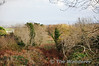 The trackbed is very overgrowth at bridge OBV6 to the North of Spa. This view looks towards Tralee. Sat 17.11.12