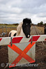 Horse at Ballingrane Level Crossing. Sun 31.03.13