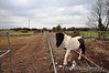 This is one method of vegetation removal. Horses and Goats at Ballingrane No. 2 Crossing. Sun 31.03.13