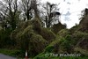 Outside Roscrea at Loughanavatta are the remains of an overbridge. Tues 04.04.17