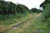 The overgrown remains of the Athy Tegral Branch. This picture shows the spur into the factory. Sun 19.08.12
