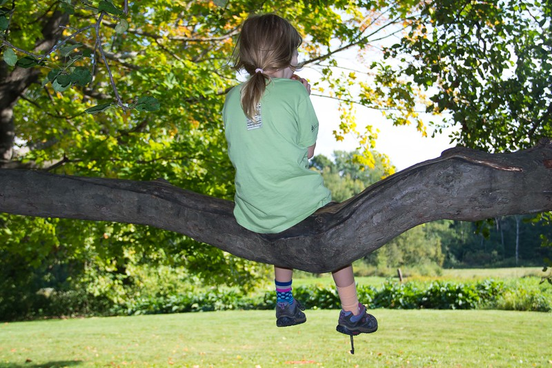 A child eating an apple while sitting in an old apple tree at Woolman Hill Retreat Center, Dearfield, MA