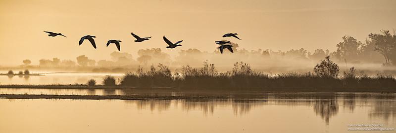 Alba en las marismas  / Dawn in the marshes