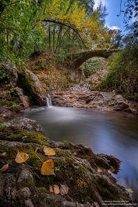 Susurros de Otoño/ Autumn whispers