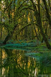 El bosque encantado /The Enchanted Forest
