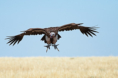 Talon-ted