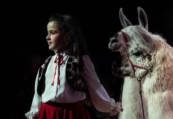 CircusKnie2018 © Klaus Brodhage (24)