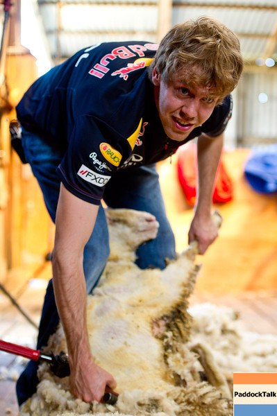 GEPA-23031199008 - FORMULA 1 - Grand Prix of Australia, preview. Image shows Sebastian Vettel (GER/ Red Bull Racing) and a sheep at Warrok Cattle Farm. Photo: Getty Images/ Mark Watson - For editorial use only. Image is free of charge