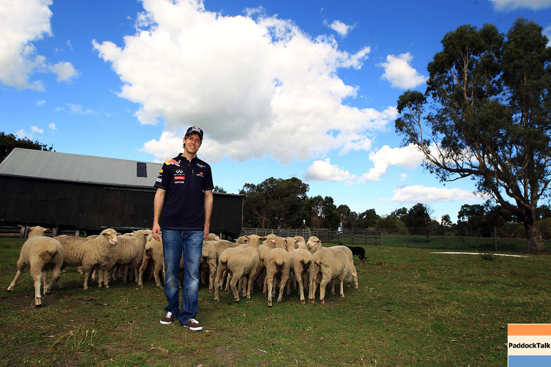 GEPA-23031199006 - FORMULA 1 - Grand Prix of Australia, preview. Image shows Sebastian Vettel (GER/ Red Bull Racing) and sheep at Warrok Cattle Farm. Photo: Getty Images/ Mark Thompson - For editorial use only. Image is free of charge