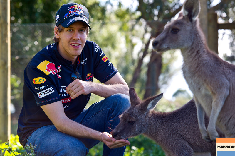 GEPA-23031199011 - FORMULA 1 - Grand Prix of Australia, preview. Image shows Sebastian Vettel (GER/ Red Bull Racing) and Eastern Grey Kangaroos. Photo: Getty Images/ Mark Watson - For editorial use only. Image is free of charge