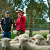 GEPA-23031199010 - FORMULA 1 - Grand Prix of Australia, preview. Image shows Sebastian Vettel (GER/ Red Bull Racing), shearer Travis Scott and sheep at Warrok Cattle Farm. Photo: Getty Images/ Mark Watson - For editorial use only. Image is free of charge