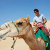 GEPA-09111199000 - FORMULA 1 - Grand Prix of Abu Dhabi, Yas Marina Circuit, preview, Sand Dune Safari. Image shows Mark Webber (AUS/ Red Bull Racing) with a camel. Photo: Getty Images/ Mark Thompson - For editorial use only. Image is free of charge