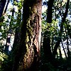 Purisima Creek  Redwoods Preserve - Half Moon Bay, CA 2020